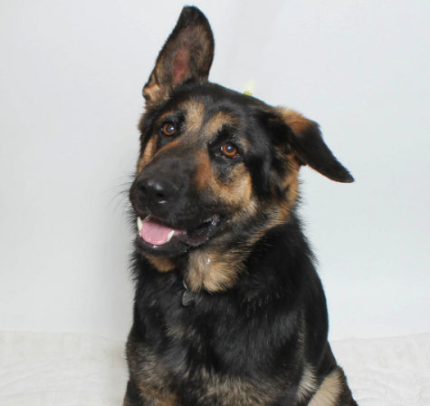 Remi is just one of many local pets in search of a new home!